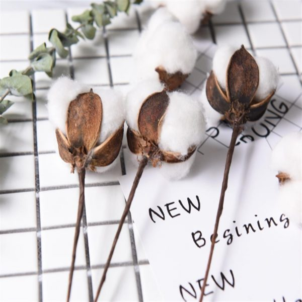6pcs/bunch Natural dry flower cotton branches single cotton ball dried flower head artificial cotton branches white
